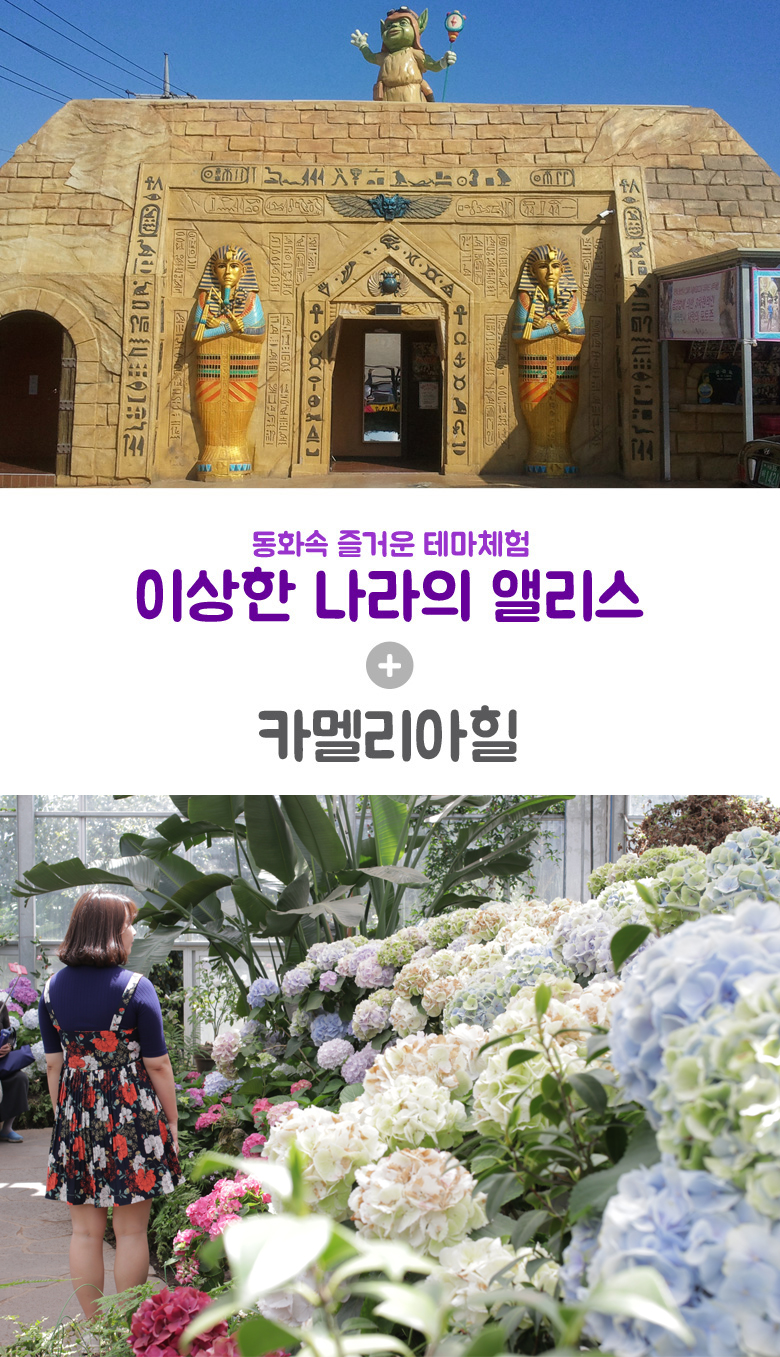 이상한나라의앨리스+카멜리아힐.jpg