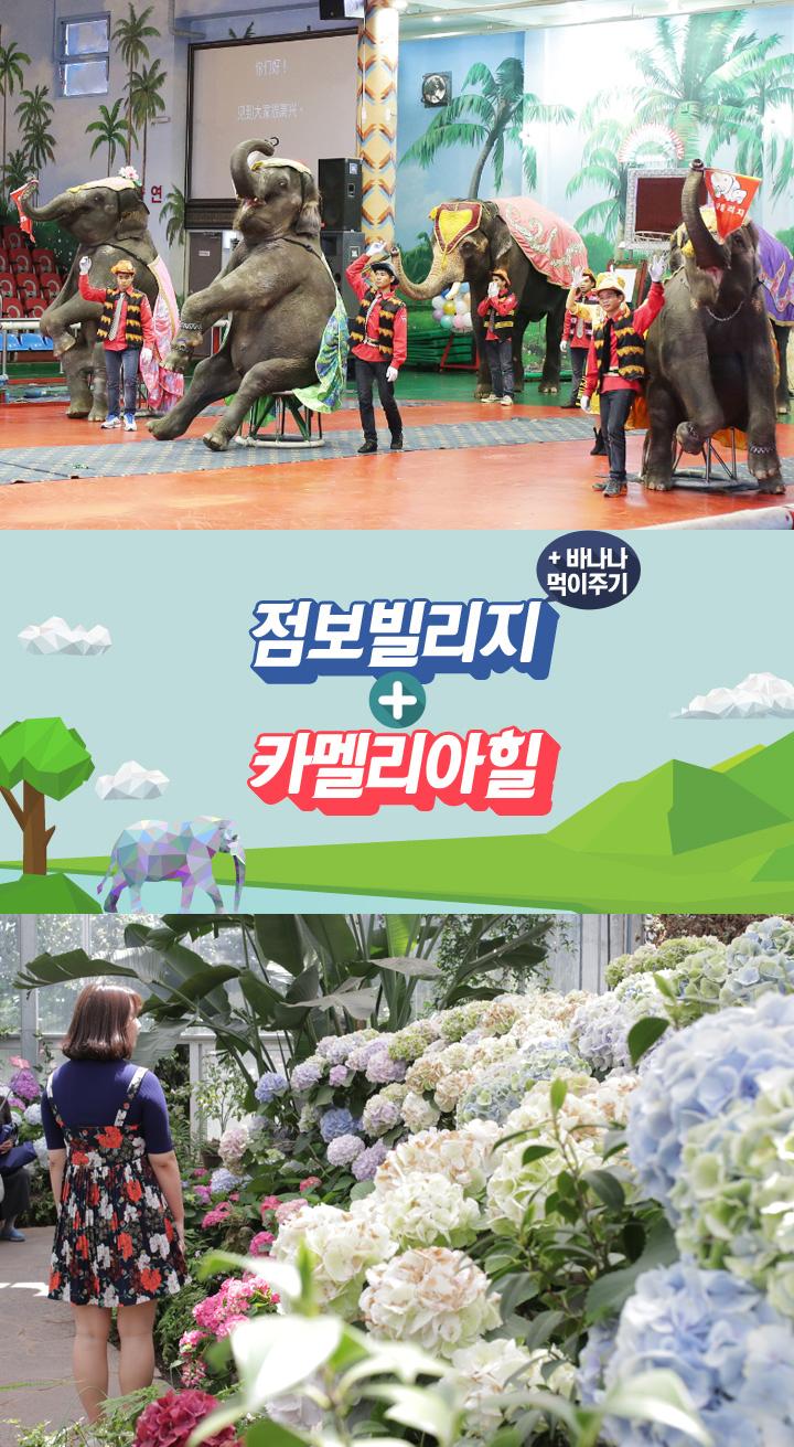 점보빌리지바나나먹이주기+카멜리아힐.jpg
