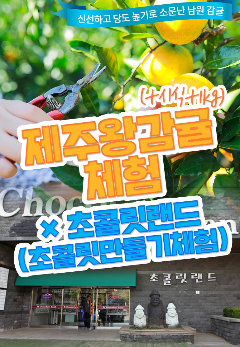 제주왕감귤체험-감귤체험+시식+1kg+초콜릿랜드-초콜릿-만들기-체험_01.jpg